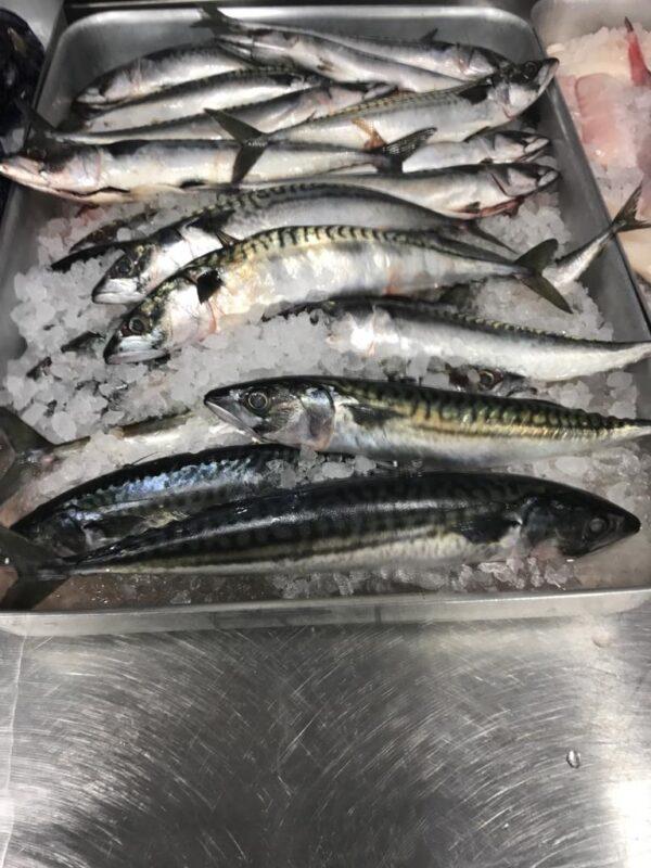 Mackerel at Peets Plaice in Southport